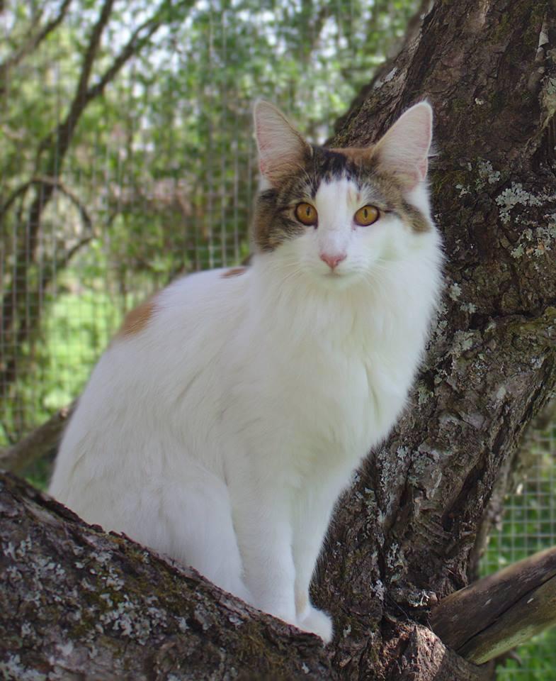 AnnaBelle i kattgården