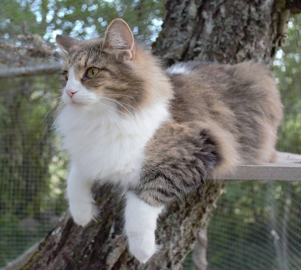 Nora i kattgården